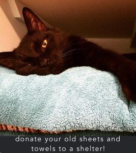 donatetowels-cat